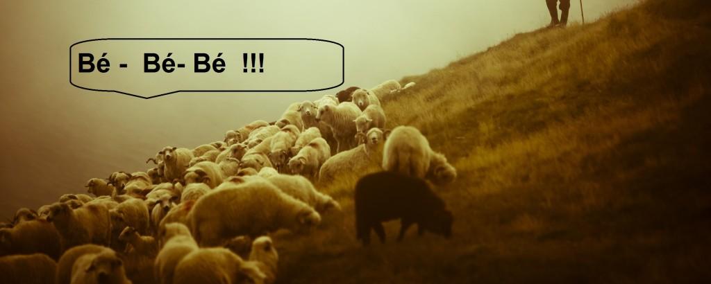 Pastýř 3.